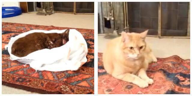 Familiens kat ligger død på gulvet - hvad der så sker er dybt rørende.