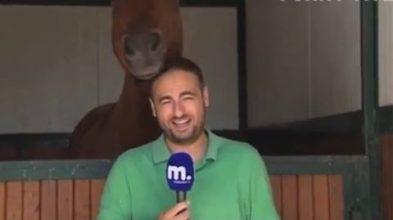 Journalist kan ikke holde masken – se nu hvad hesten gør!