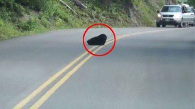 Bilisten ser en sort plet på vejen – Kort efter opdager de hvorfor folk er stoppet op for at nyde synet foran dem.
