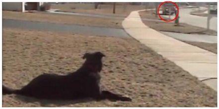 Familiehunden venter hver dag på at drengen stiger af skolebussen – Se så hundens fantastiske reaktion.