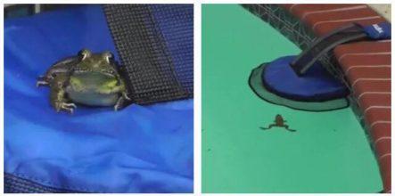 Genial opfindelse kan nu redde tusindvis af dyr fra at drukne