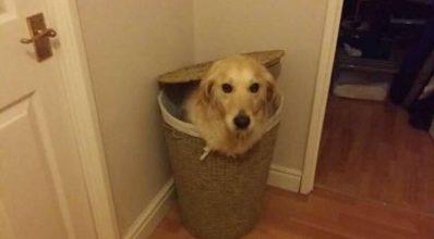 """16 hunder der """"tror"""" de har fundet det helt perfekte gemmested – nummer 5 er hylende morsom!"""