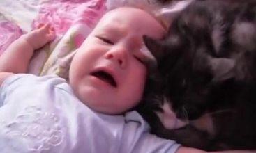Baby ligger og græder ulykkeligt – men kattens reaktion er hjertevarmende