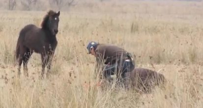 Han befrier hesten fra de fastspændte lænker på dens forben – hvad hesten gør er yderst hjertevarmende