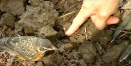 Fuglen vil på ingen måde forlade manden ude i haven – indser hurtigt hvordan han skal gribe situationen an!