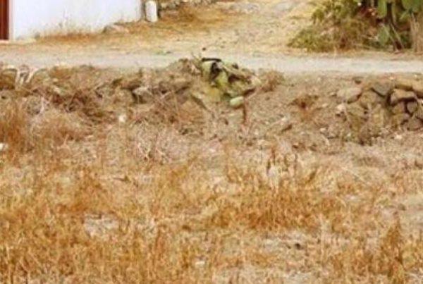 Kan du finde katten på dette billede på under 30 sekunder? - mange har forsøgt men få er lykkedes