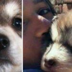 """Hun adopterer en nuttet lille hundehvalp: """"Man ser åbenbart ikke en løve-hund så tit"""""""
