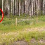 Drengene stopper op for at kigge nærmere på elg i skoven – havner pludseligt i en redningsaktion