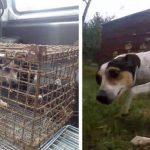 Hund havde været i rustent bur alt for længe – se reaktionen da den endelig mærker græs under poterne igen
