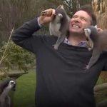 BBC-reporter får uventet besøg af lemurer under liveoptagelse – nu griner hele verden