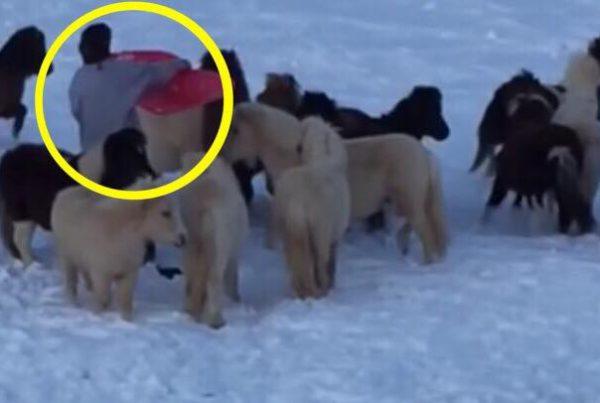 Drengen vil bare gerne kælke på bakken - men hestene har en helt anden plan