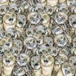Kan du finde katten på dette billede? – kun 2 ud af 10 kan