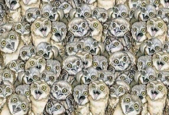 Kan du finde katten på dette billede? - kun 2 ud af 10 kan