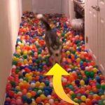 Ejer investere i mere end 5000 plastikbolde, for at forvandle gangen til en legeplads til sin hund