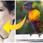 Vittighed: Moren køber en papegøje med hjem fra dyrehandleren – Hvad den pludseligt siger chokere alle!