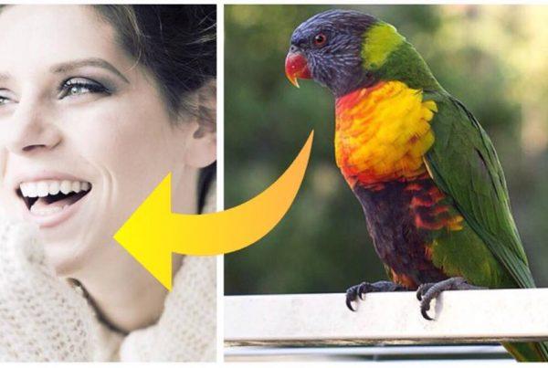 Vittighed: Moren køber en papegøje med hjem fra dyrehandleren - Hvad den pludseligt siger chokere alle!
