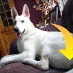 Hund slår ildelugtende prut: Se dens egen morsomme reaktion her nedenfor