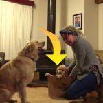 Ejer overrasker sin hund med ny lille hvalp – se den hjertevarmende reaktion