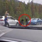 Turist står og tager billeder af bjørn – så får den nok!