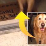 Ejeren prøver forgæves at få sin hund over tærsklen i hjemmet – årsagen er yderst bedårende!