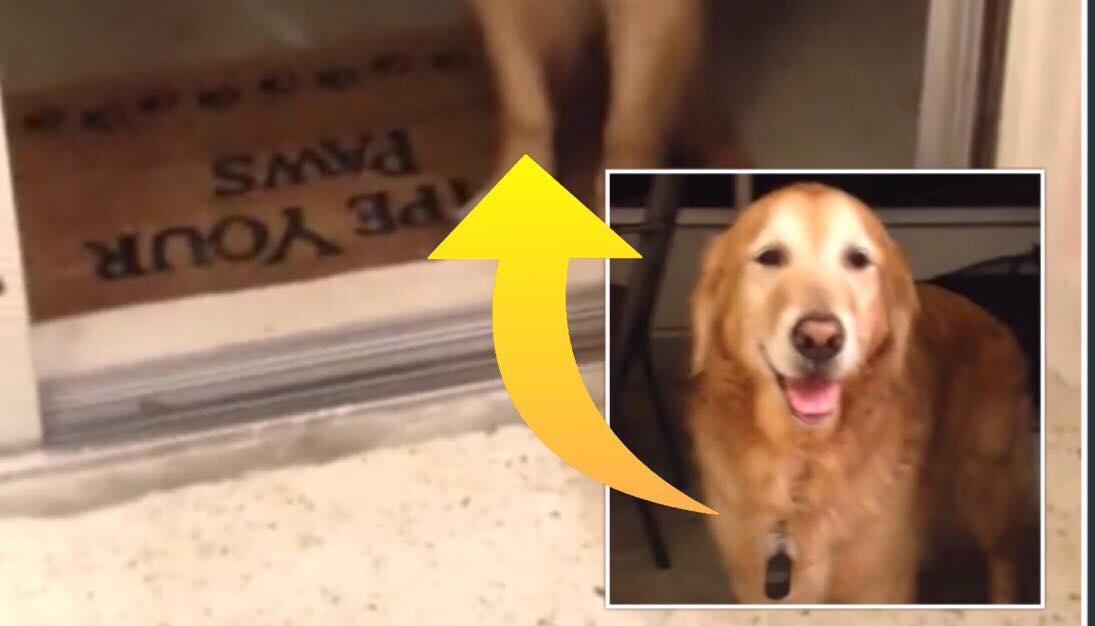 Ejeren prøver forgæves at få sin hund over tærsklen i hjemmet - årsagen er yderst bedårende!
