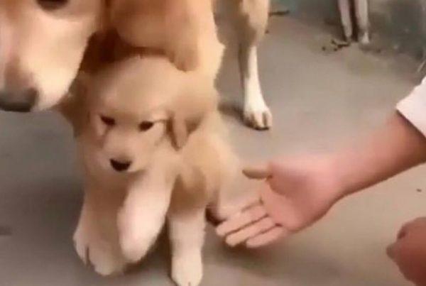 Hunden beskytter sin hvalp - se det bedårende øjeblik