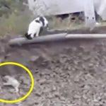 Hvalpen sidder fast i grøften og skriger i panik – hold nu øje med katten som har en smart plan!