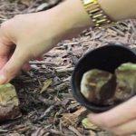 Info: Smid aldrig dine teposer ud i skraldespanden – her er 6 geniale grunde til, at du bør grave dem ned i stedet