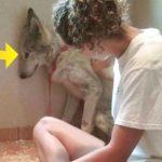 Mishandlet hund er bange for alt: Indtil han får et nyt hjem som viser ham hvad kærlighed er!