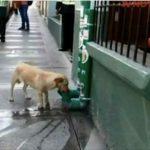 Politiet bliver hyldet på nettet efter de har installeret vand- og madstationer til gadehunde!