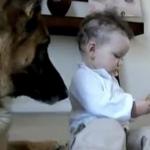 """Pigen """"stjæler"""" hundens godbid: Resultatet kom bag på familien og millioner på nettet!"""