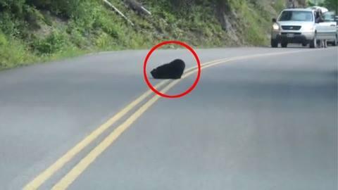 Bilisten ser en sort plet på vejen - Kort efter opdager de hvorfor folk er stoppet op for at nyde synet foran dem.
