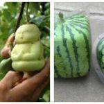 De 10 dyreste frugter i verden.