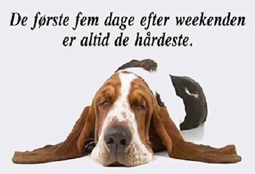 søde billede citater weekenden   Danmarks sødeste citater & billeder finder du altid på  søde billede citater