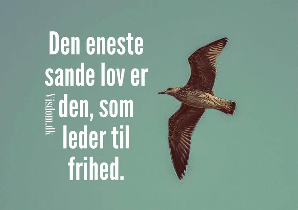 frihed citater Lov   Frihed, Kærlighed, Venskab, Familie, Ærlighed find dine  frihed citater