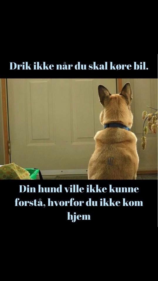 citater om biler drik   drik   Danmarks bedste citat side   Visdom.dk er danmarks  citater om biler