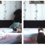 Ejer satte skjult kamera op for at udspionere sin hund – hundens hævn er vanvittigt morsom!