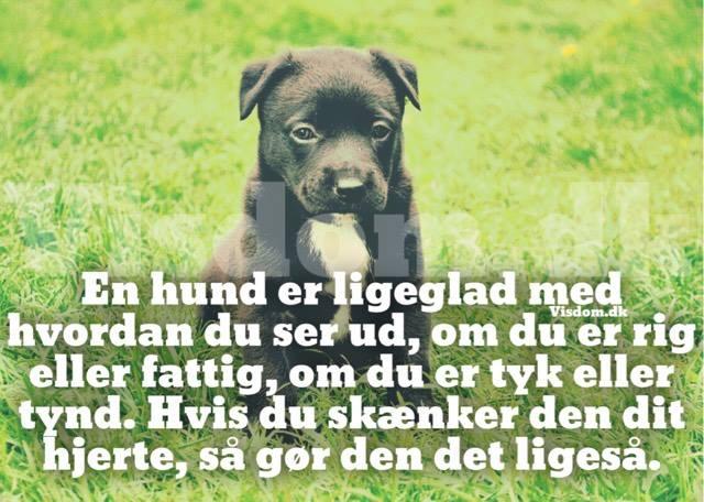 citater om hunde En hund er ligeglad med..   Find flere citater her på .visdom.dk citater om hunde