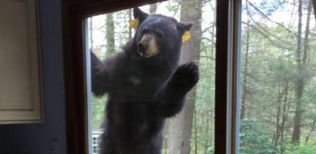 En kvinde bagte lækker brownie - pludseligt banker en uventet gæst døren!
