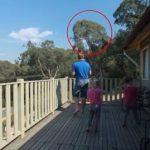 Far fløjter på balkonen, og pludselig sker det utrolige!