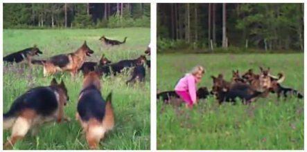 Lille pige leger med sine 14 firebenede venner i naturen – se hvad der sker når hun løfter sine arme.