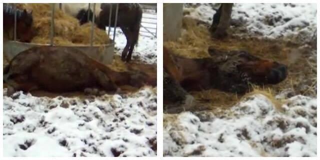 Han opdager døende forfrosne heste i kulden - han gør det ubeskrivelige.
