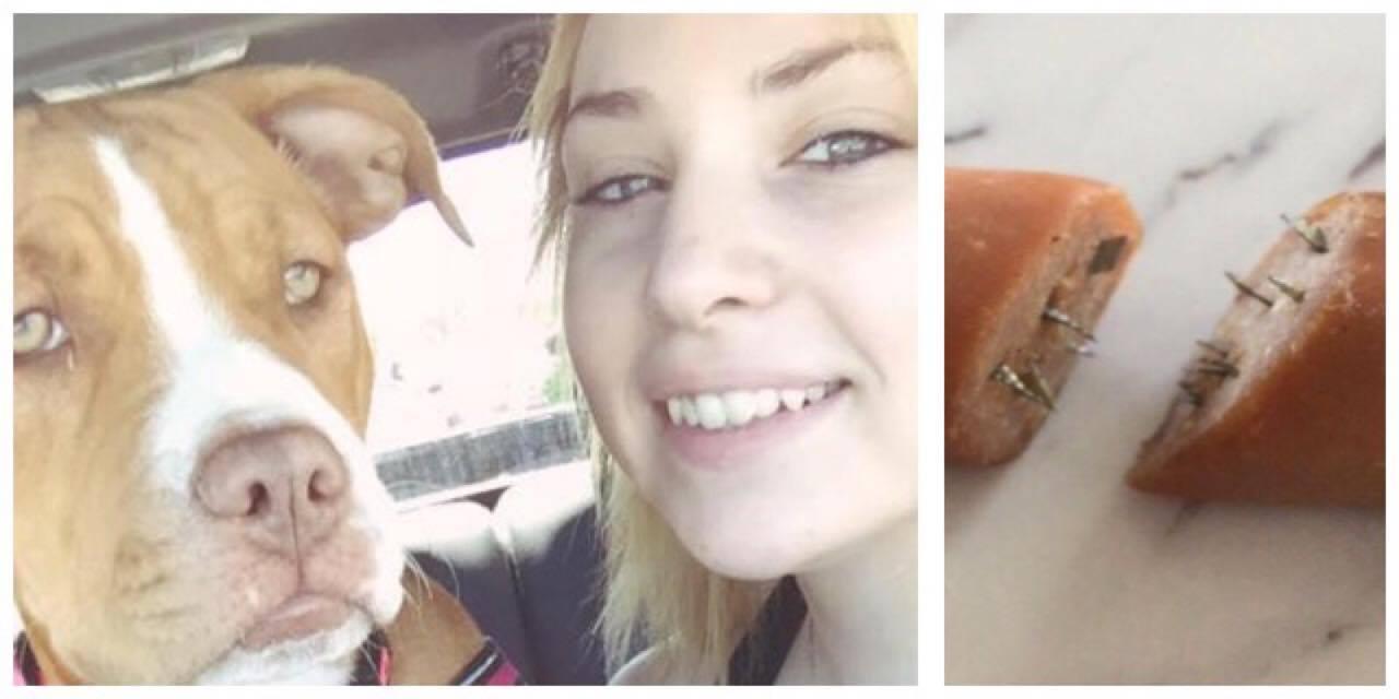 Hundeejeren fandt godbidder, fyldt med barberbalde i haven