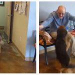 Hunden har været i kennel 2 uger – se nu dens reaktion, når den ser sin ejer igen.