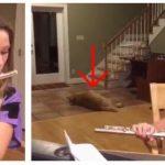 Hunden i familien er ikke helt begejstret for at datteren øver på sin fløjte – dens  reaktion er hylende morsom!