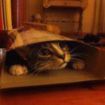 Hylende morsomt! – 10 katte der nægter at acceptere, at papkassen er alt for lille til dem