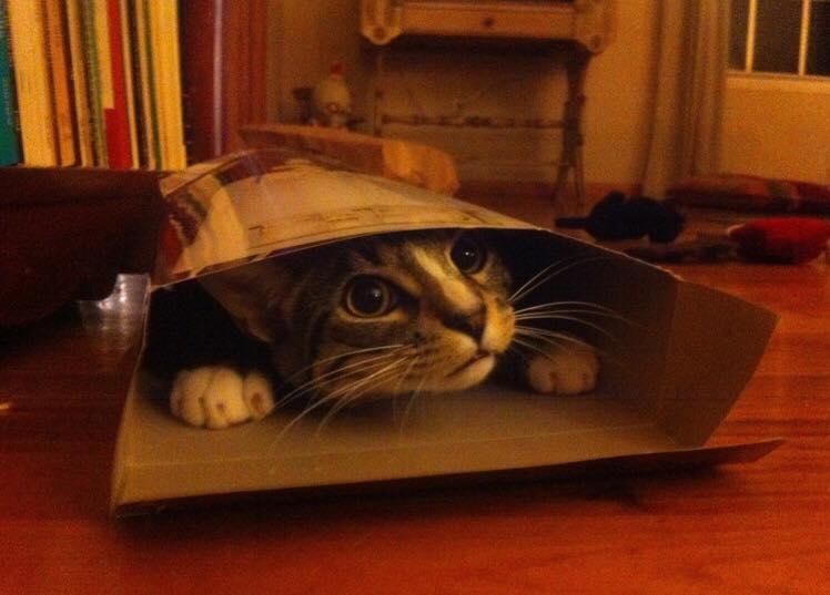 Hylende morsomt! - 10 katte der nægter at acceptere, at papkassen er alt for lille til dem