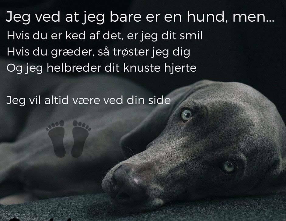 citater om hunde hjerte   Danmarks bedste citater finder du på visdom.dk citater om hunde