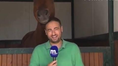 Journalist kan ikke holde masken - se nu hvad hesten gør!