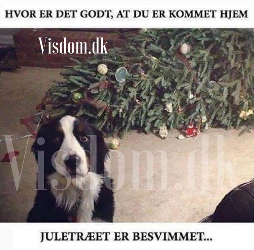 citater om dyr og mennesker juletræet   søde og smukke citater om dyr og mennesker, Visdom.dk  citater om dyr og mennesker